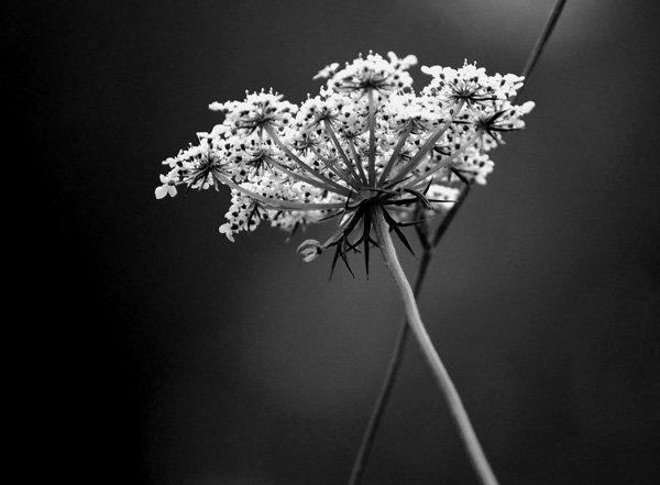 fleurnb.jpg